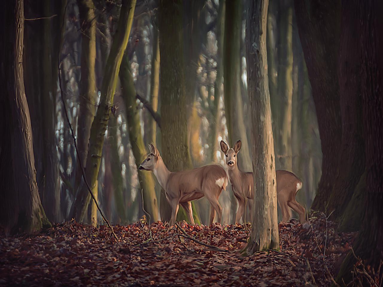 Doe-a-Deer